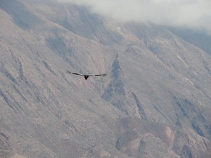 DSCN7976-condor tilcara