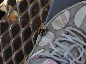 mariposas en iguazú lado argentino