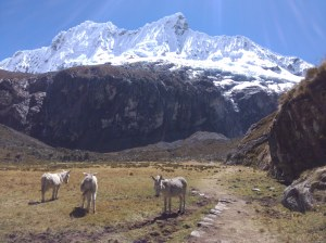 Trek laguna 69 PN Huascaran
