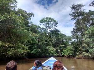 selva cuyabeno ecuador